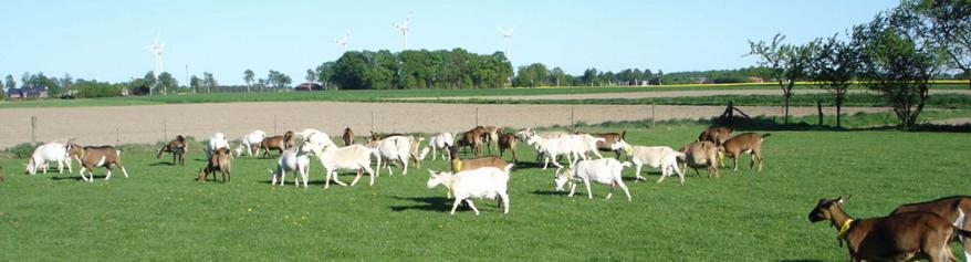 Sieben Ziegen Käsespezialitäten