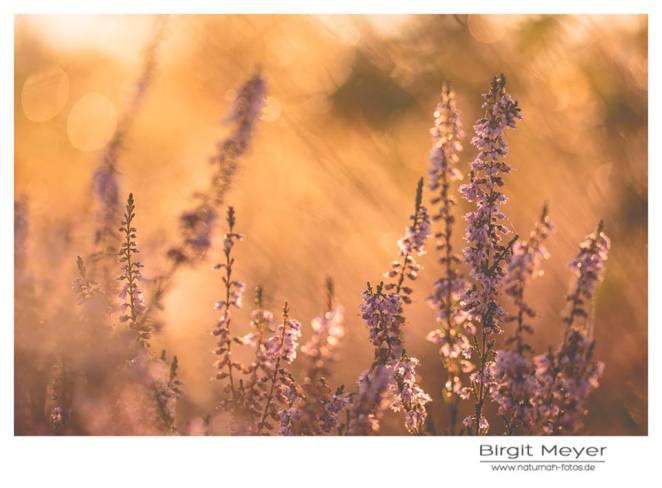 Foto: Birgit Meyer, Naturnah-Fotos.de